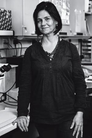 Isabel Palmeirim