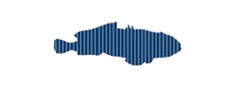 FISHNOISE